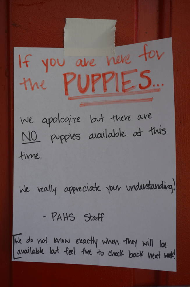 Sign related to the status of the Scotch Plains puppies and kittens