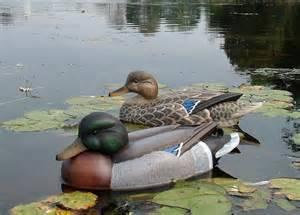 Carousel image 4b043b7a1c946f6535c9 duck and decoy