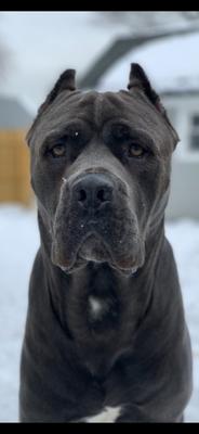 Boulevard Veterinary Clinic Pet of the Week: Enzo
