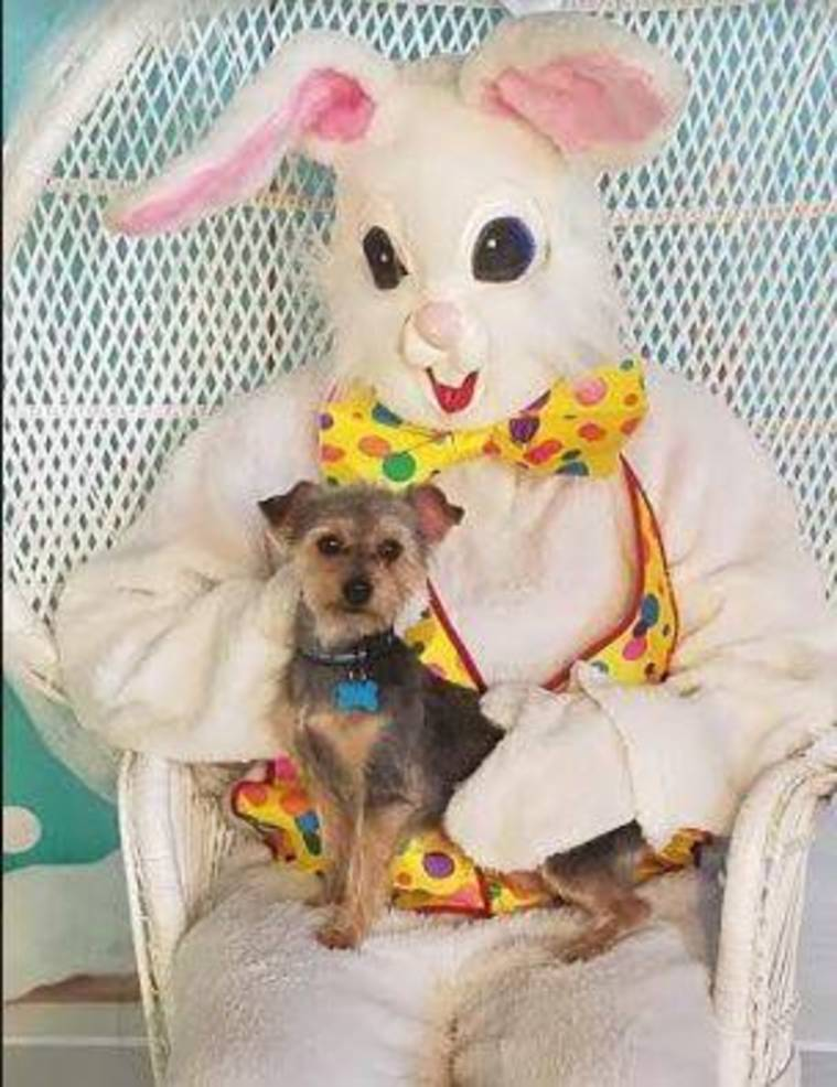 Easter Bunny Pets April 2019 a.JPG