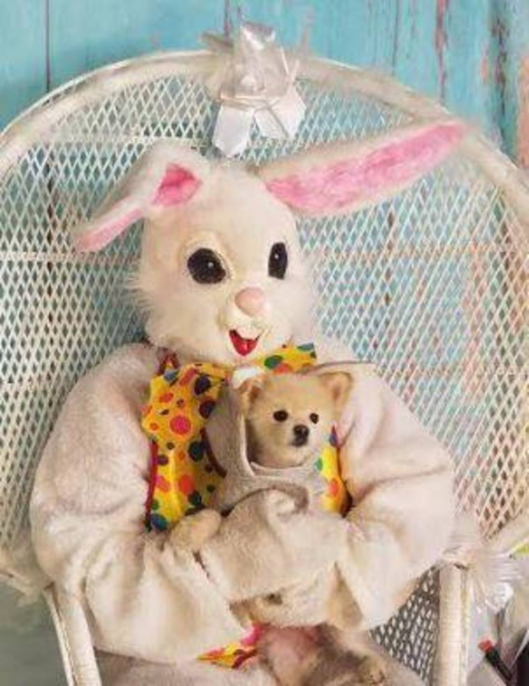 Easter Bunny Pets April 2019 j.JPG