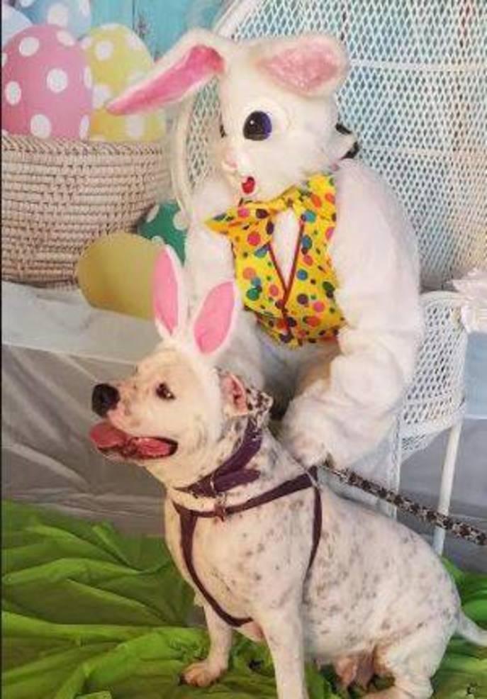 Easter Bunny Pets April 2019 d.JPG