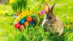 Carousel image 6ec1c0c04e83af899569 easter bunny