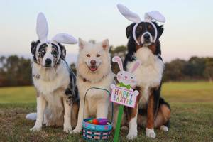 Ready for a Virtual Easter Bonnet Parade?  We Are.