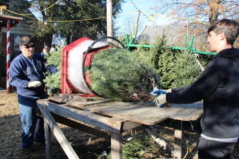 EDIT volunteers prep tree.jpg