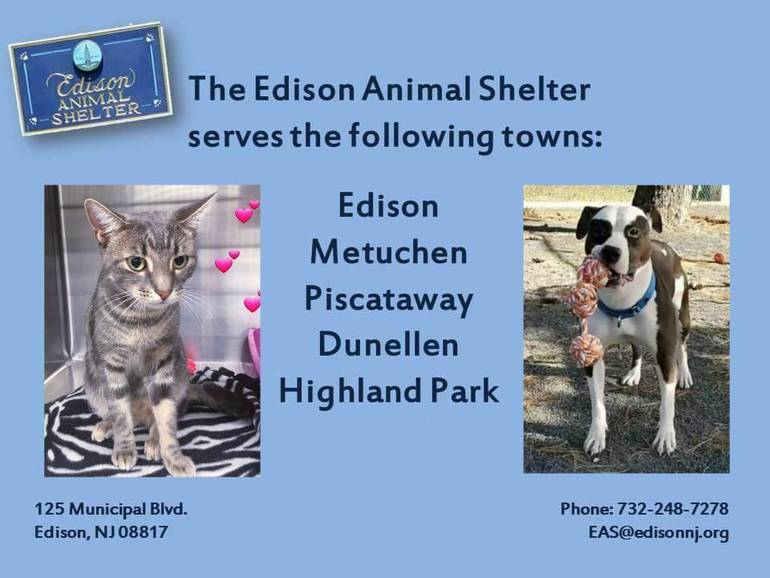 Edison Animal Shelter.jpg