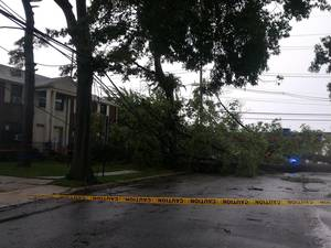 Carousel image 15784fc823cdc42a0f57 edit downed tree across street
