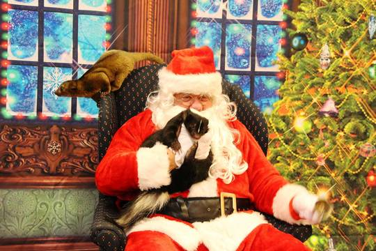 Top story 5a0c608c81dd2a37fcb6 edit santa with animals