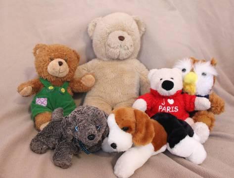 Top story c485aa5abd9f3a15af7f edit teddy bear shot