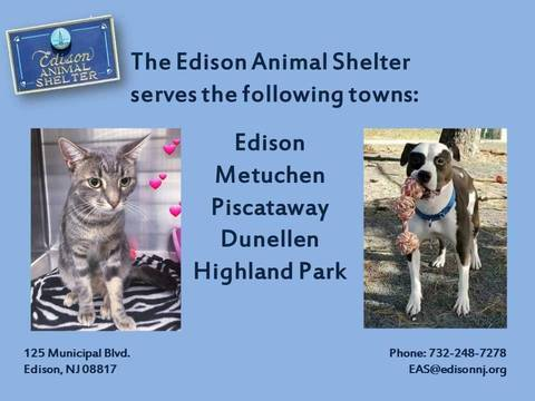 Top story d6f8f68435f719047c05 edison animal shelter