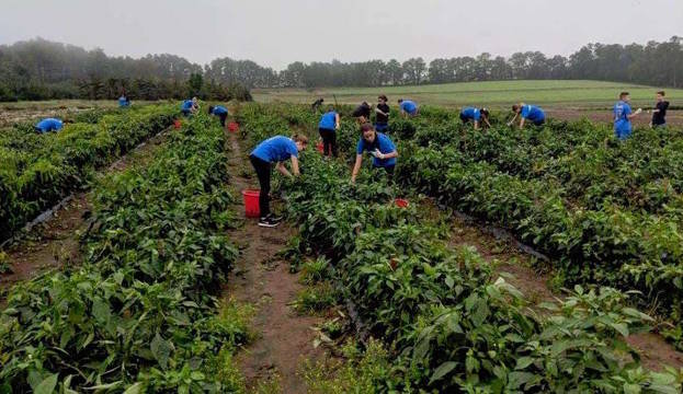 Top story 250750d2764a737c73f8 ehms pepper picking 7