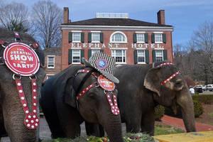 Carousel image bdb88d2c854f96db9c21 elephant hotel