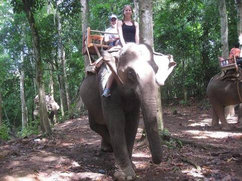 Top story f3f8c00c4a0fc667e030 elephant