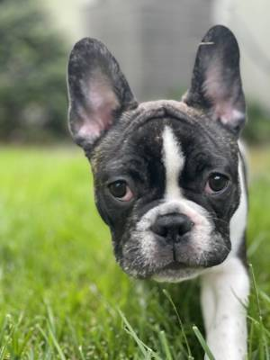 Boulevard Veterinary Clinic Pet of the Week: Finn