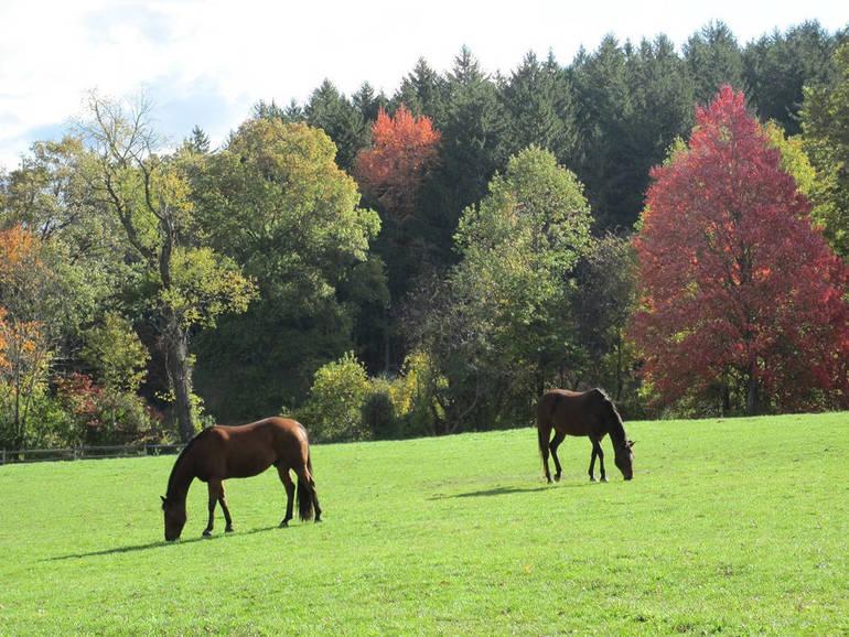 Fall Pasture 10.22.10 012 copy.JPG