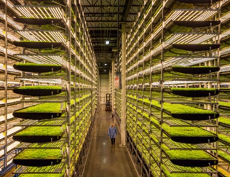 Jersey City to Open Vertical Farming in Two Public Housing Locations
