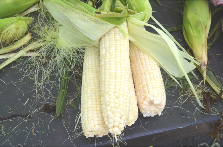 Farmers Market - Corn.png