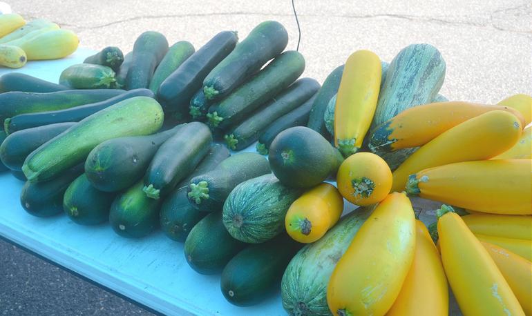 Farmers Market - Squash 72520.png