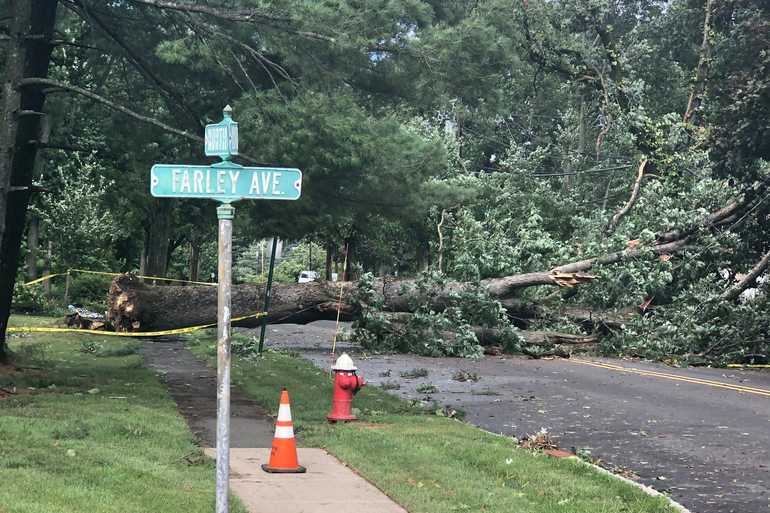 Downed tree on Farley Ave. in Fanwood.