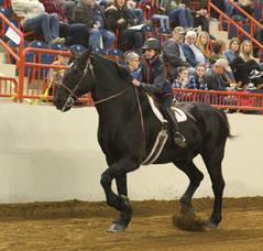 Carousel image b2900834020896f567b2 farm show horses 1 1072