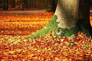 Carousel image e7b3d793bb22b7d4a739 fall foliage 1913485 960 720