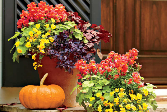 Top story d4c5c0886a848f908511 fall container