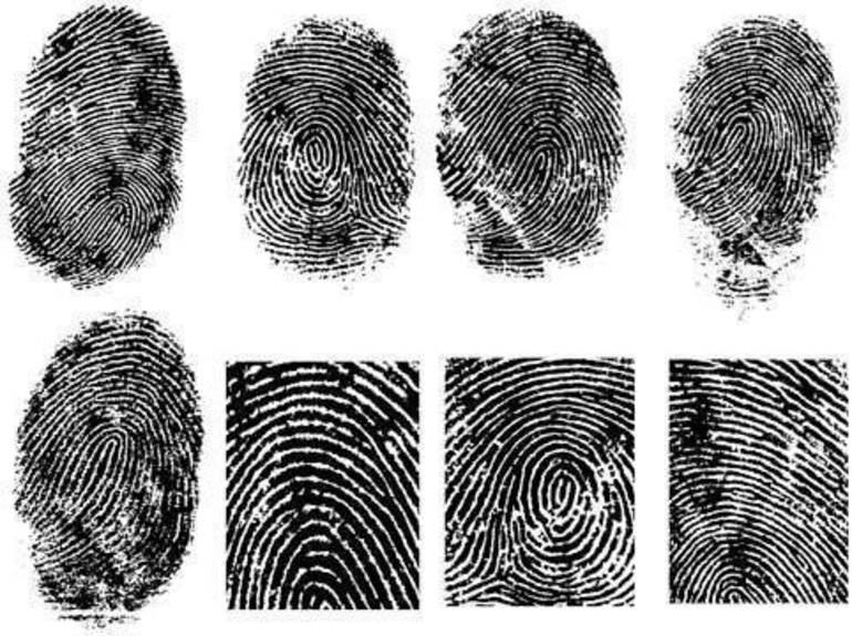 fingerprint_vector_1_149611.jpg