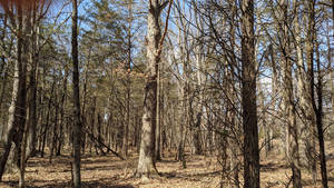 Readington Adds New Tract of Land to Preservation Plans