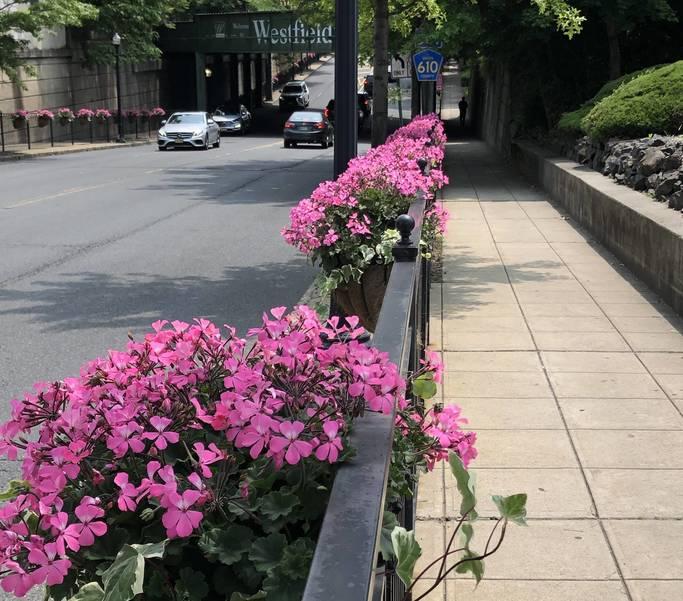 Flowers 2019.jpeg