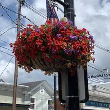 Carousel image 4525374355c839720a70 flowering baskets