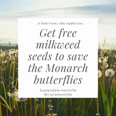 Save the Monarch Butterflies with Milkweed Plants