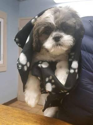 Carousel image 00474265eb0923364e76 found dog edison animal shelter