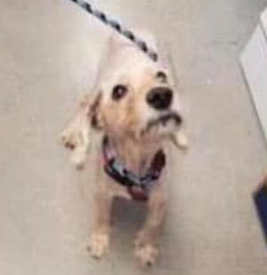 Found Dog in Florham Park