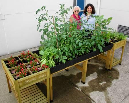 Top story 107ec97c6877ee6ba534 garden5