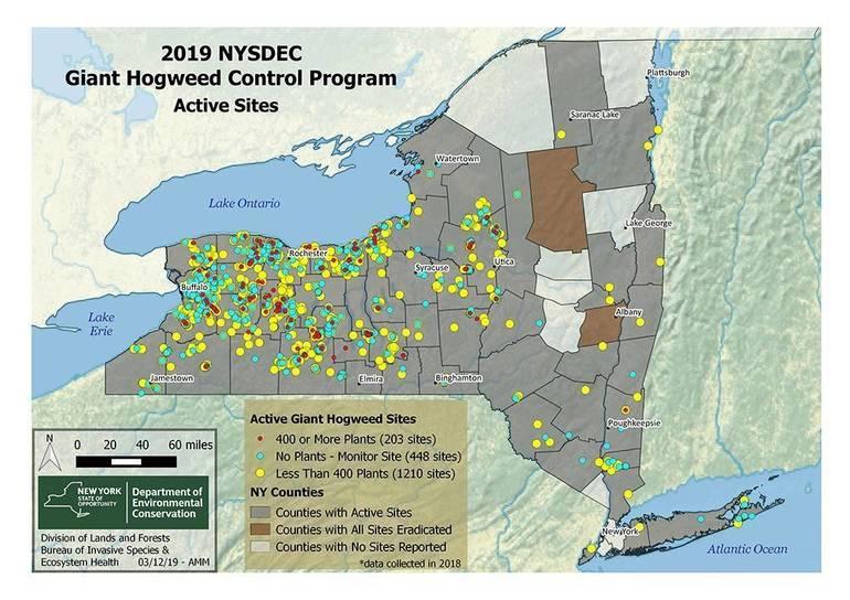 giant hogweed map (2).jpg