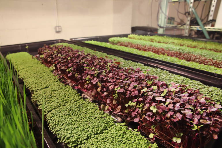 Farming for Good in Hackensack
