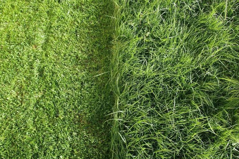 Best crop a084bf2bed95062f6fc4 grass shutterstock 431233024
