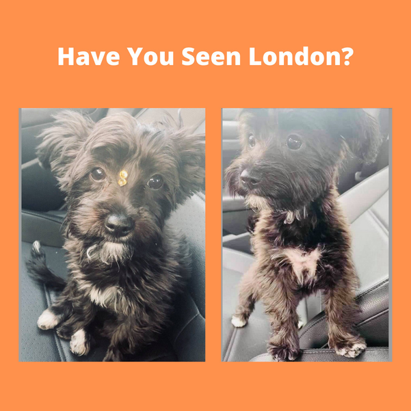 Missing Puppy in Plainfield Update: London Has Been Found