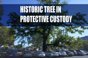 Carousel_image_cab8fd1f394a50c07456_historic-tree-00