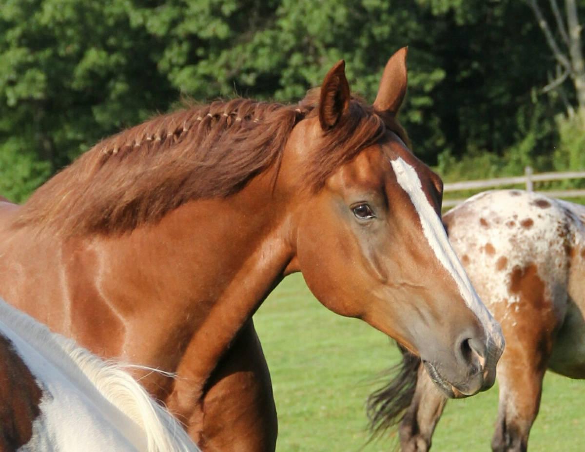Horse Profile copy.JPG