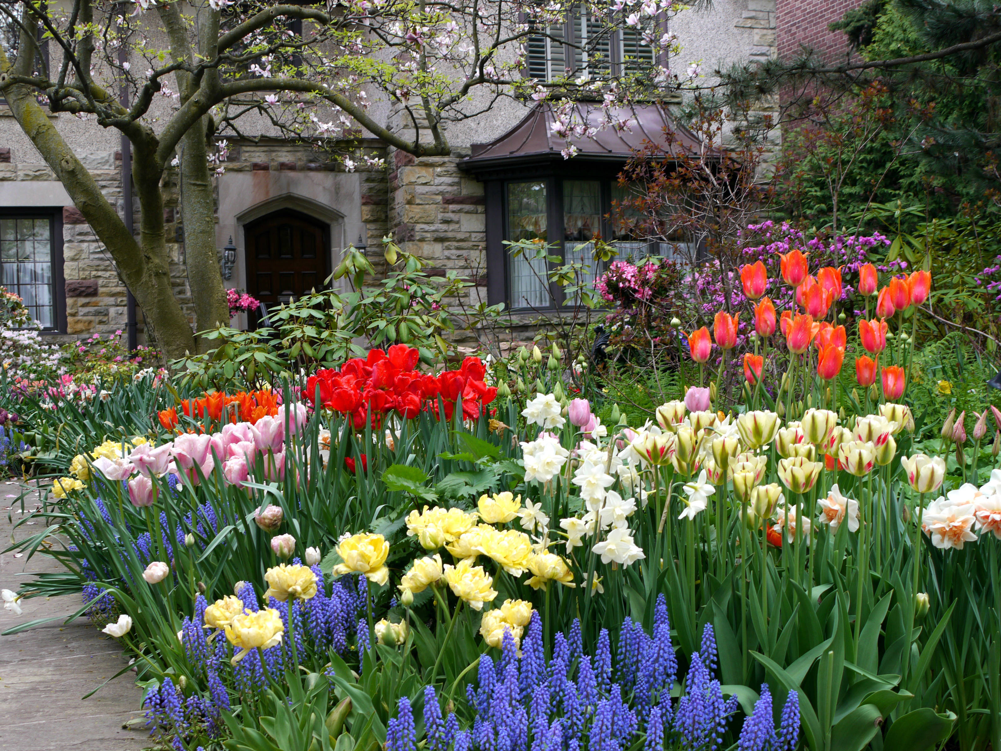 house tulips spring flowers.jpg