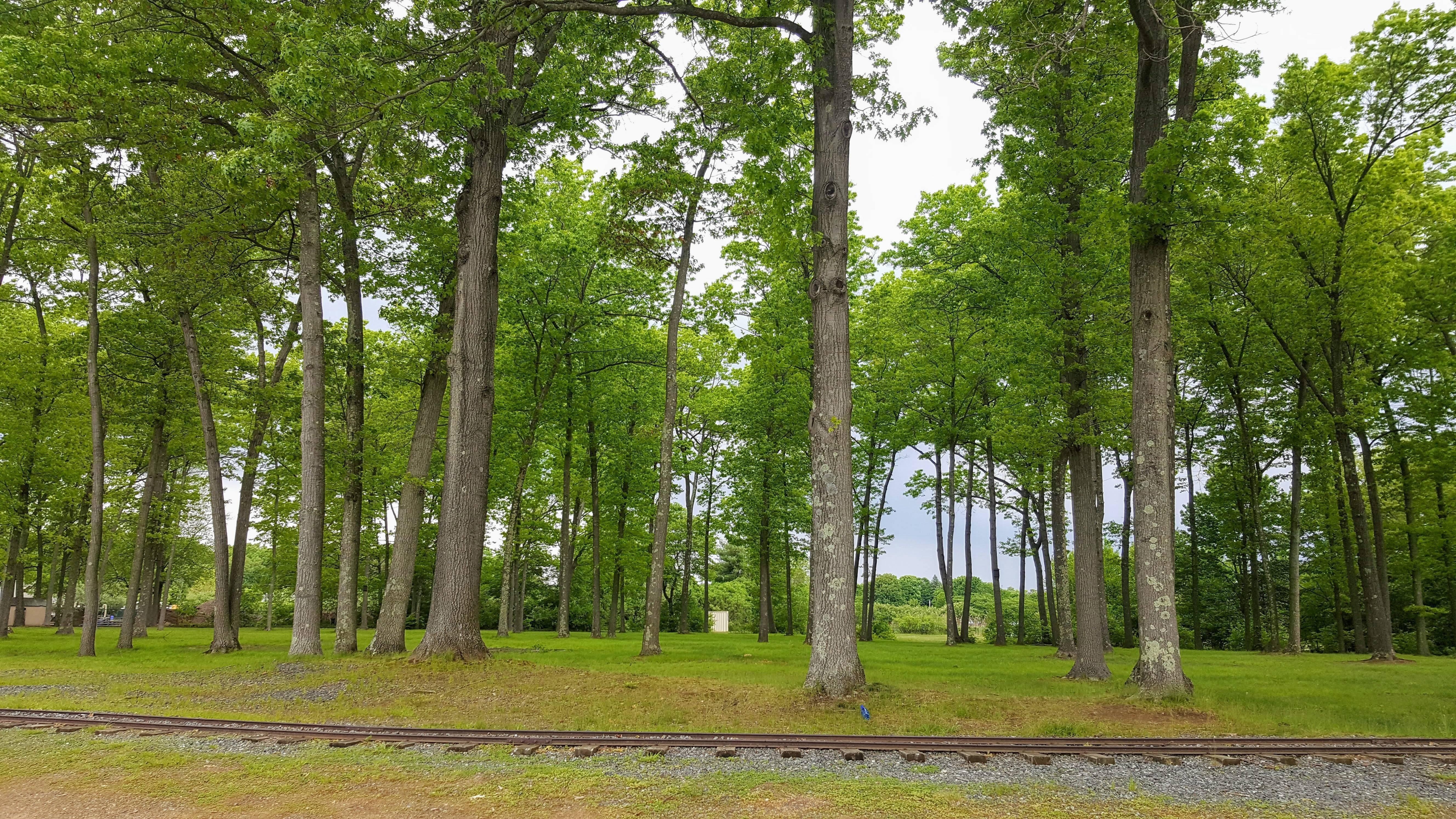 horseshoe lake oaks.jpg