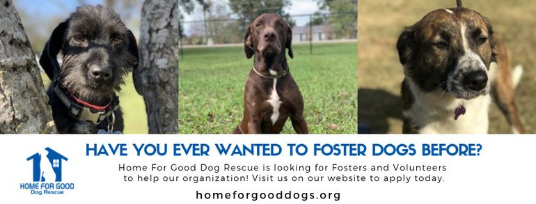 Home for Good Dog Rescue.png