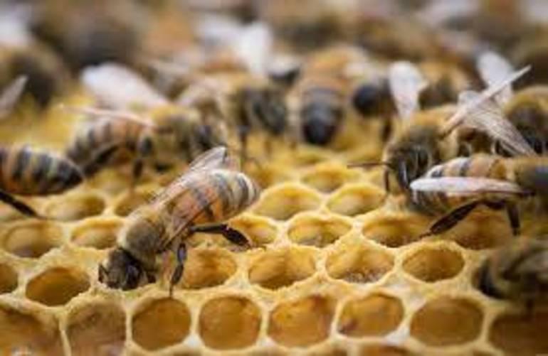 honeybeesinhive.jpg