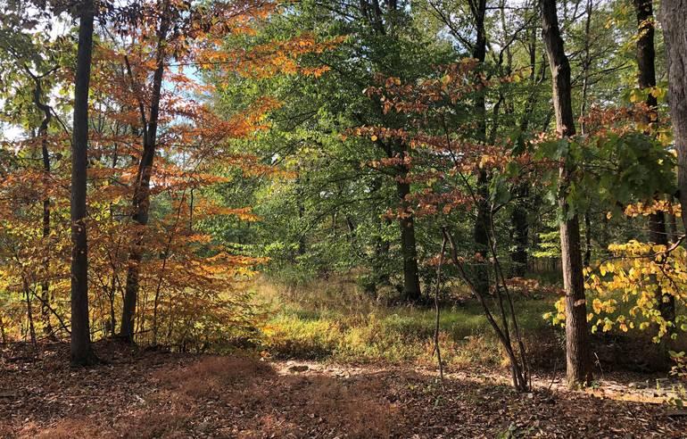 Hollenback property NJ Conservation Foundation.JPG