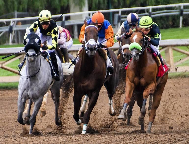 horses-3811270_1920.jpg