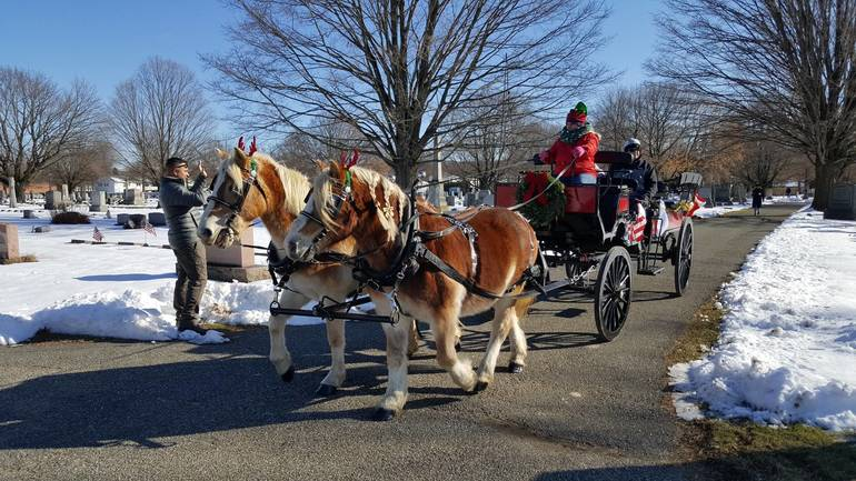 horses at home for the holidays.jpg