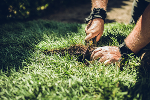 Patchy, Brown Grass? What To Do About Dead Spots In the Yard