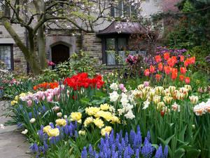 Carousel image 70a13de94cf06f22c82f house tulips spring flowers