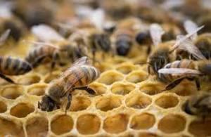 Carousel image 870f8ca29fa575f6ce34 honeybeesinhive